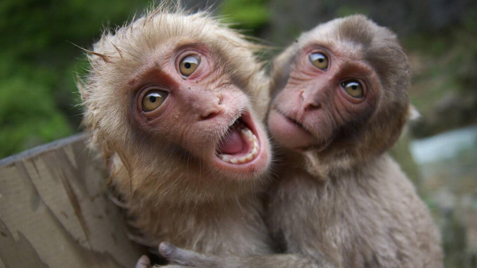 بالصور صور تموت من الضحك , اجمل الصور الضاحكه 3373 9