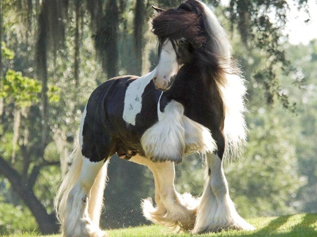 بالصور حصان عربي , اجمل صور للحصان العربي 3505 3