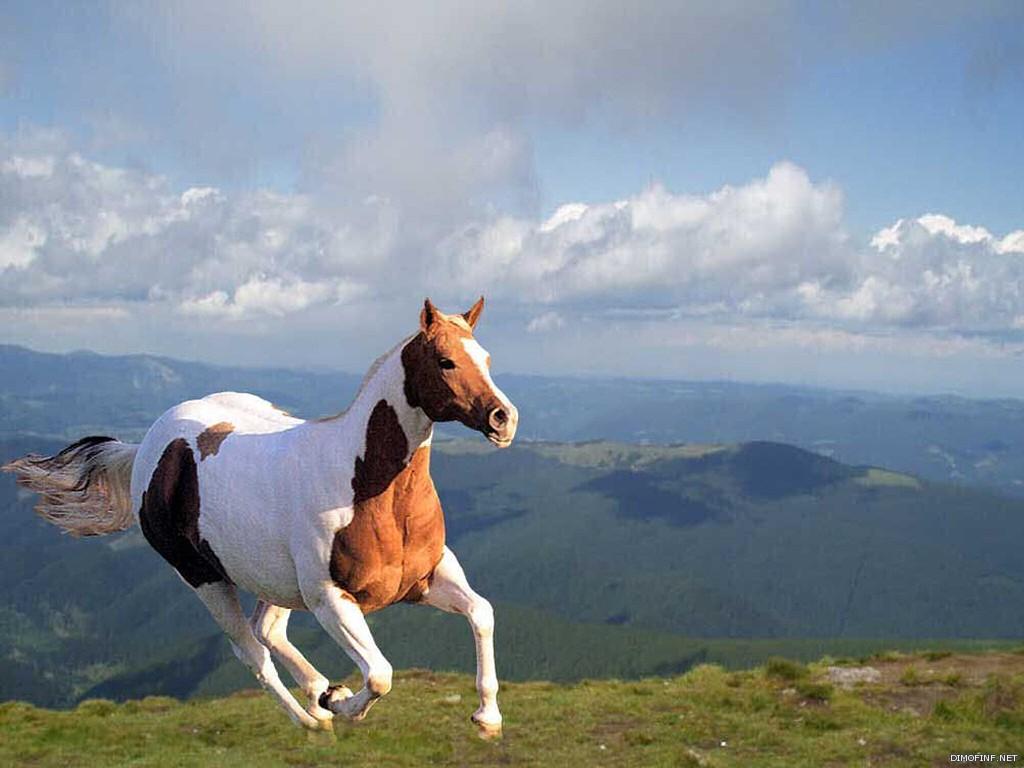 بالصور حصان عربي , اجمل صور للحصان العربي 3505 4