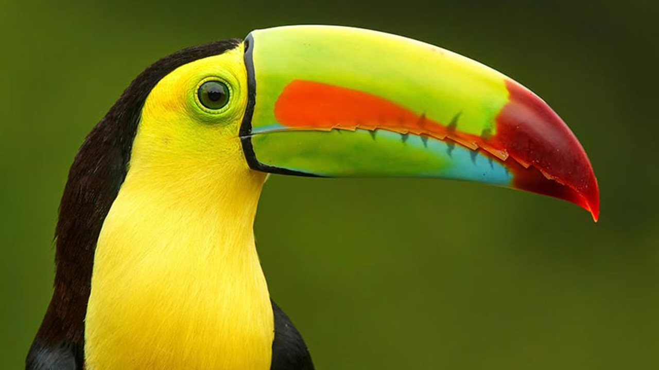 بالصور اجمل الطيور في العالم , اغرب الطيور الموجوده فالعالم 3614 1