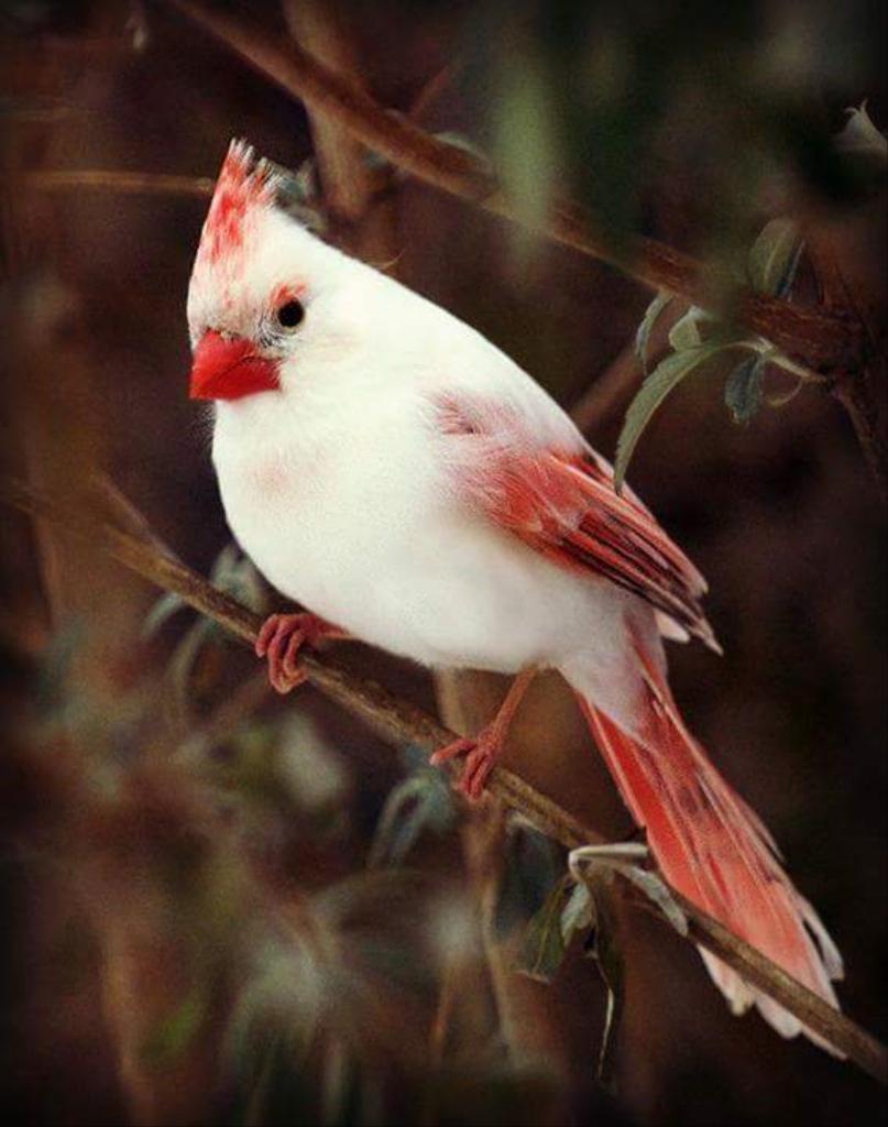 بالصور اجمل الطيور في العالم , اغرب الطيور الموجوده فالعالم 3614 2