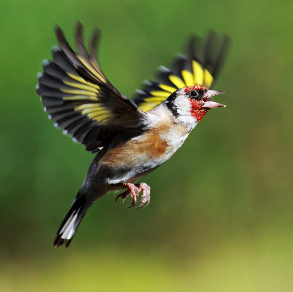 بالصور اجمل الطيور في العالم , اغرب الطيور الموجوده فالعالم 3614 3