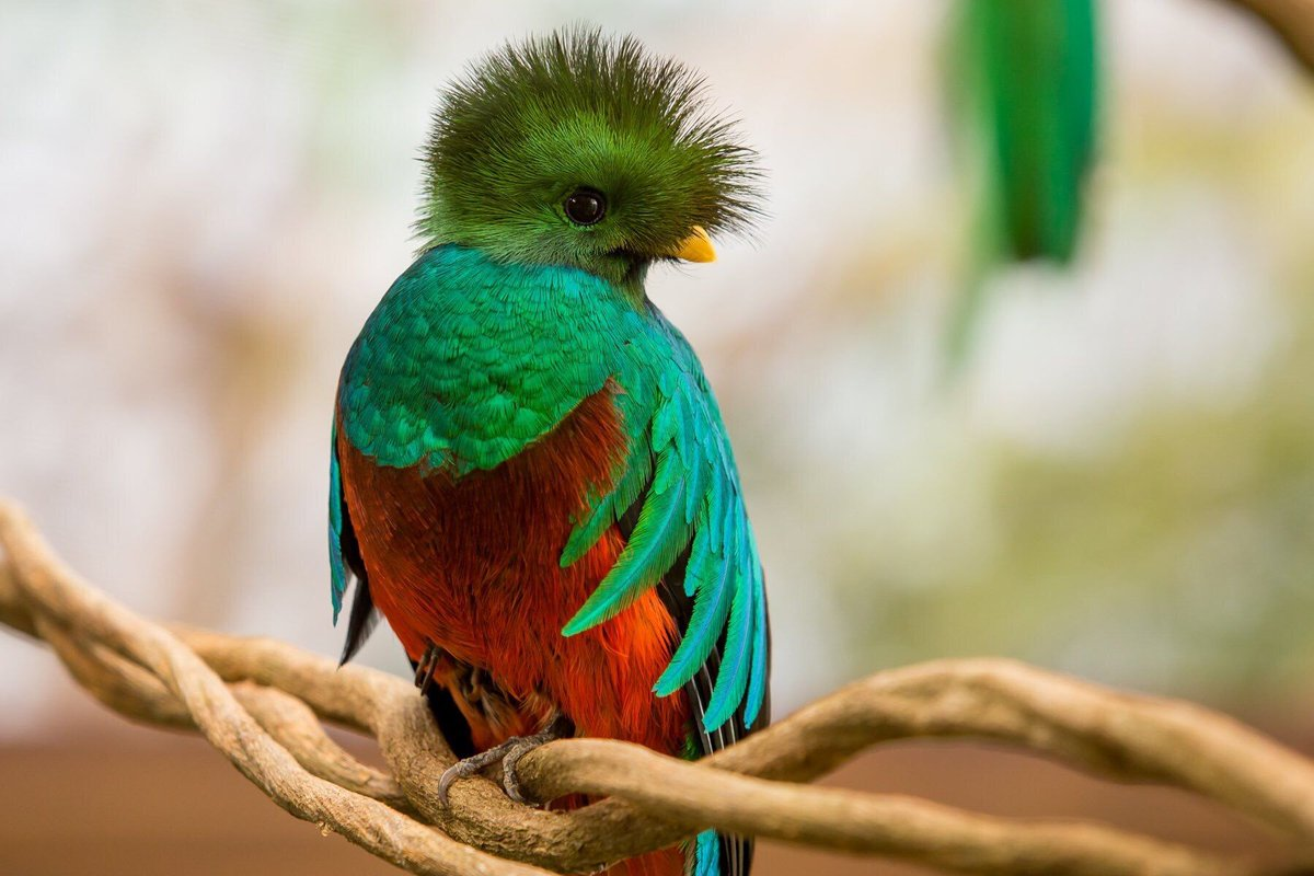 بالصور اجمل الطيور في العالم , اغرب الطيور الموجوده فالعالم 3614 4