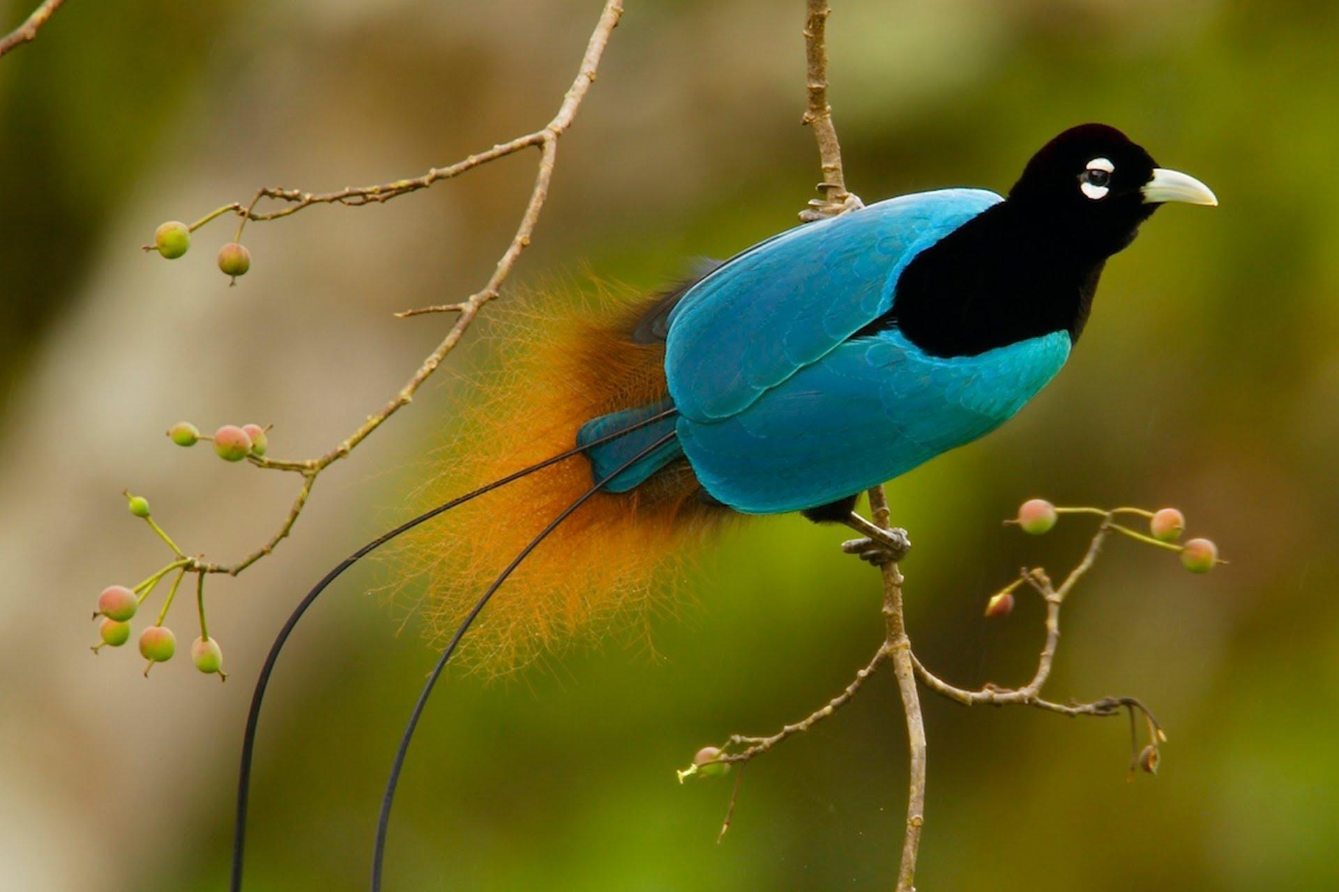 بالصور اجمل الطيور في العالم , اغرب الطيور الموجوده فالعالم 3614 5