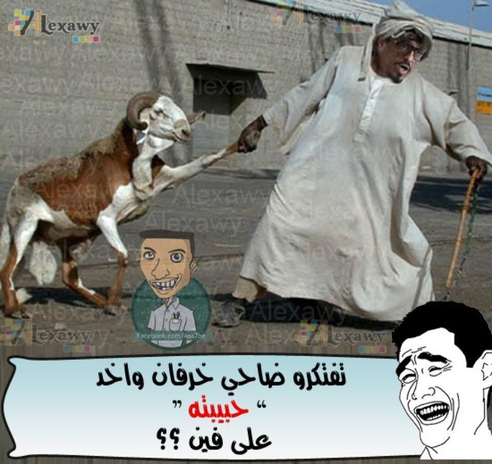 بالصور اجمل الصور المضحكة مع التعليق , صور جميله تموت من الضحك 3678 3