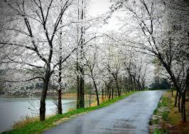 بالصور صور عن المطر , اجمل صور طبيعيه للمطر 214 11