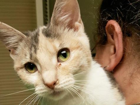 بالصور خلفيات قطط , تشكيله جديده من اجمل خلفيات القطط 220 11