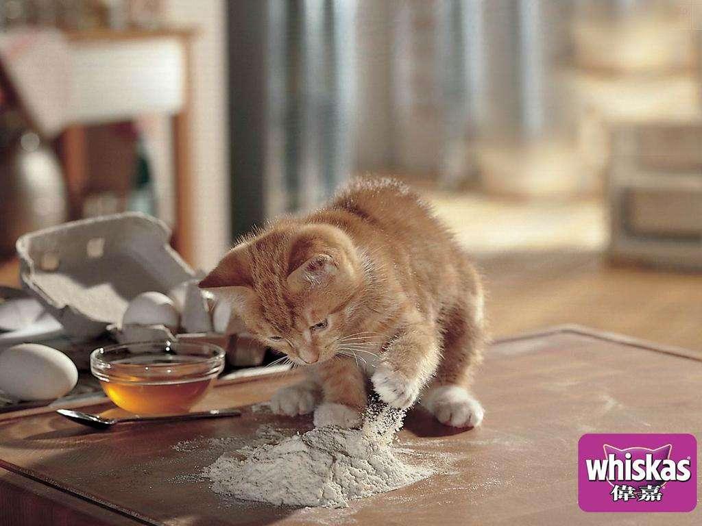 بالصور خلفيات قطط , تشكيله جديده من اجمل خلفيات القطط 220 2