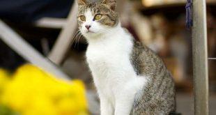 بالصور خلفيات قطط , تشكيله جديده من اجمل خلفيات القطط 220 310x165