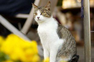 بالصور خلفيات قطط , تشكيله جديده من اجمل خلفيات القطط 220 310x205