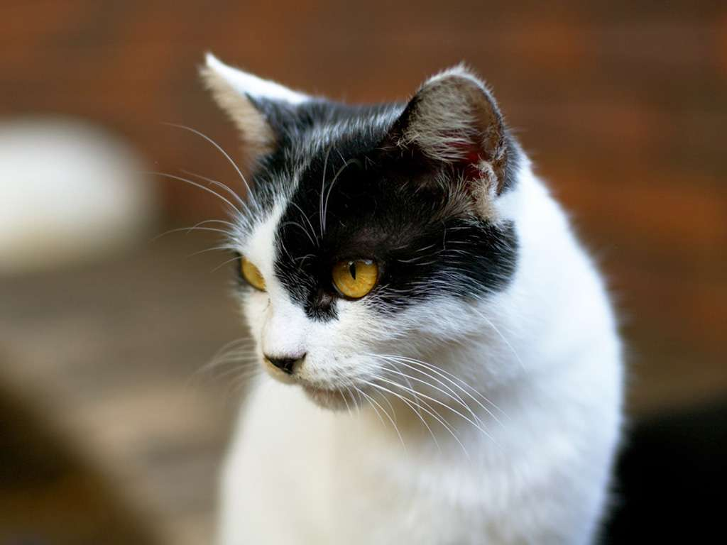 بالصور خلفيات قطط , تشكيله جديده من اجمل خلفيات القطط 220 4