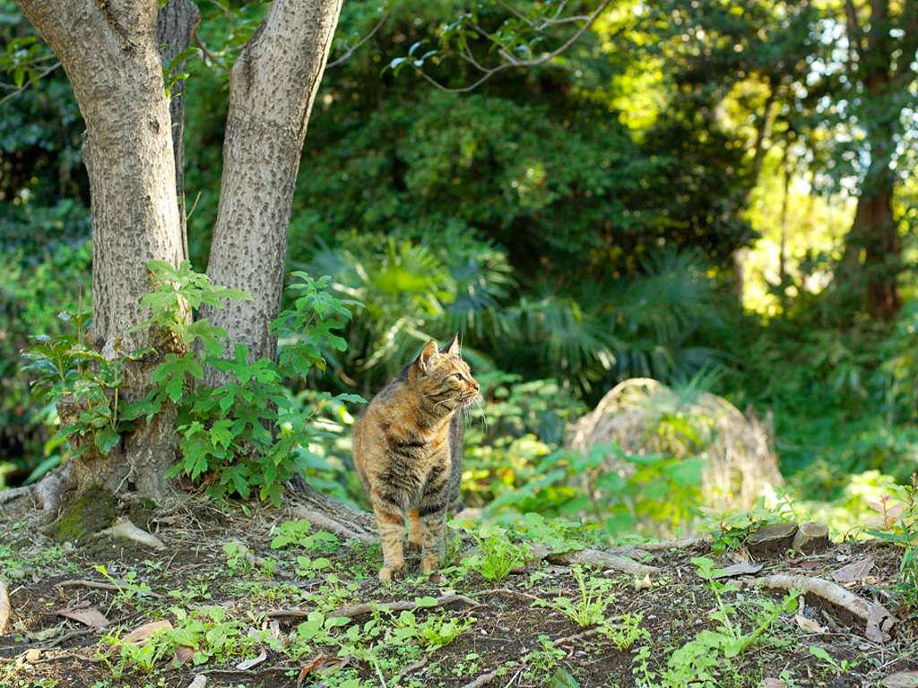 بالصور خلفيات قطط , تشكيله جديده من اجمل خلفيات القطط 220 5