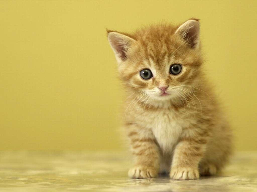 بالصور خلفيات قطط , تشكيله جديده من اجمل خلفيات القطط 220 6