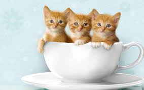 بالصور خلفيات قطط , تشكيله جديده من اجمل خلفيات القطط 220 7