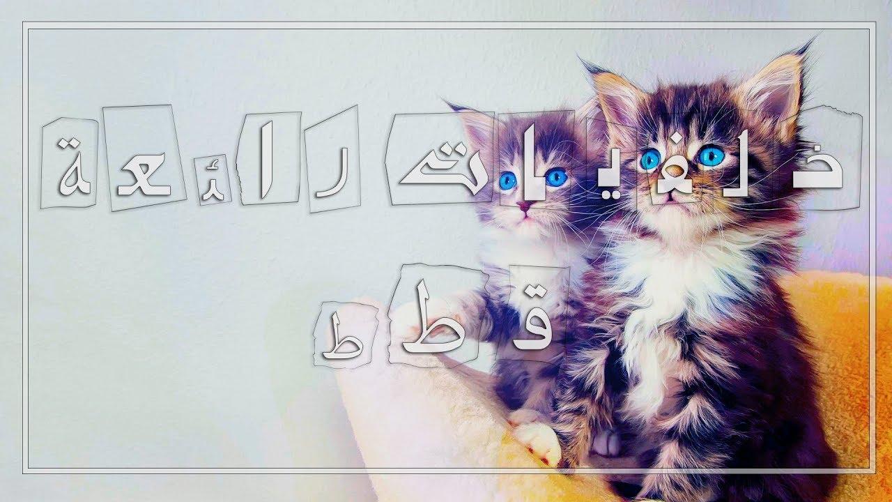 بالصور خلفيات قطط , تشكيله جديده من اجمل خلفيات القطط 220 9