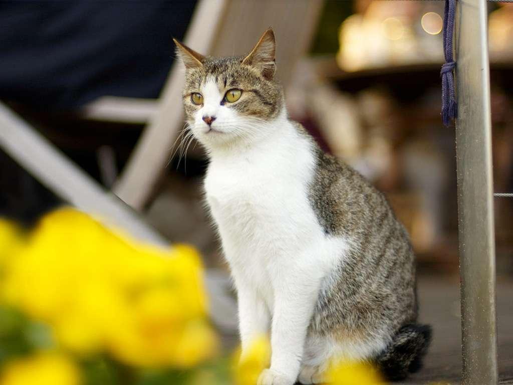صور خلفيات قطط , تشكيله جديده من اجمل خلفيات القطط