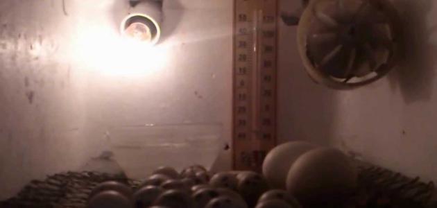 صور فقاسة بيض منزلية , طريقة صنع الفقاسة