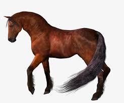 بالصور صور حصان , اروع صور حصان 4670 11