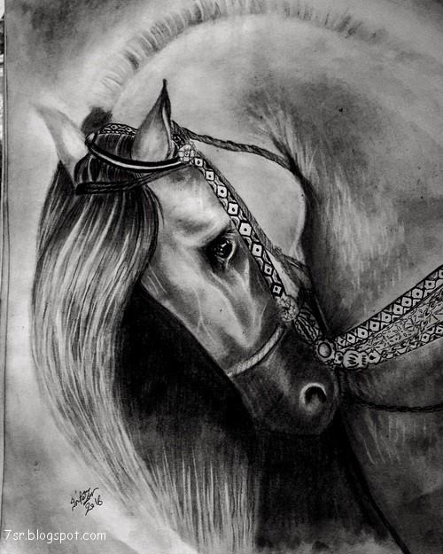 بالصور صور حصان , اروع صور حصان 4670 3