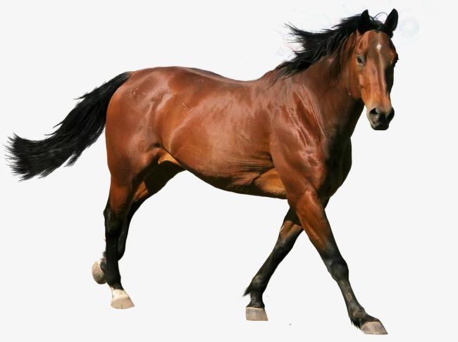 بالصور صور حصان , اروع صور حصان 4670 5
