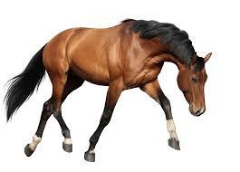 بالصور صور حصان , اروع صور حصان 4670 9