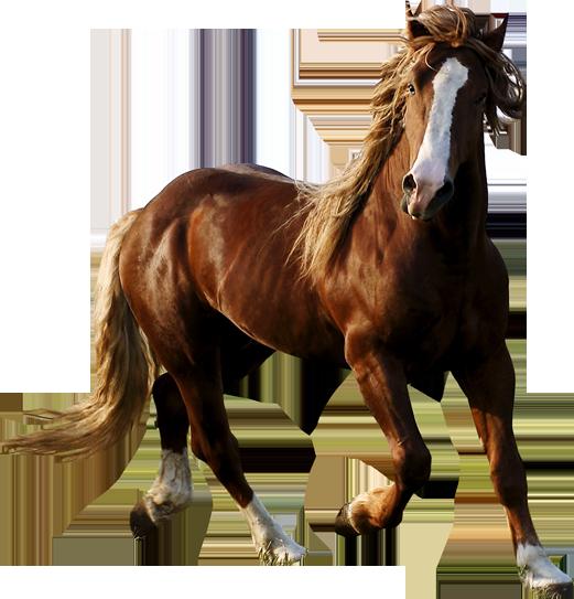 بالصور صور حصان , اروع صور حصان 4670