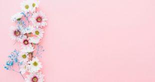 بالصور خلفيات وردية , اشيك خلفيات ورد رائعه 4727 13 310x165