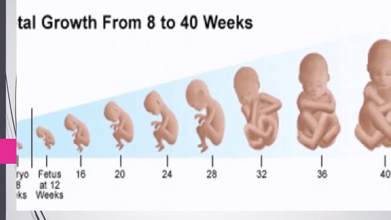 بالصور حاسبة الحمل بالاشهر , كيف تتم حاسبة اشهر الحمل ومعرفة متى تم الحمل 5103 1