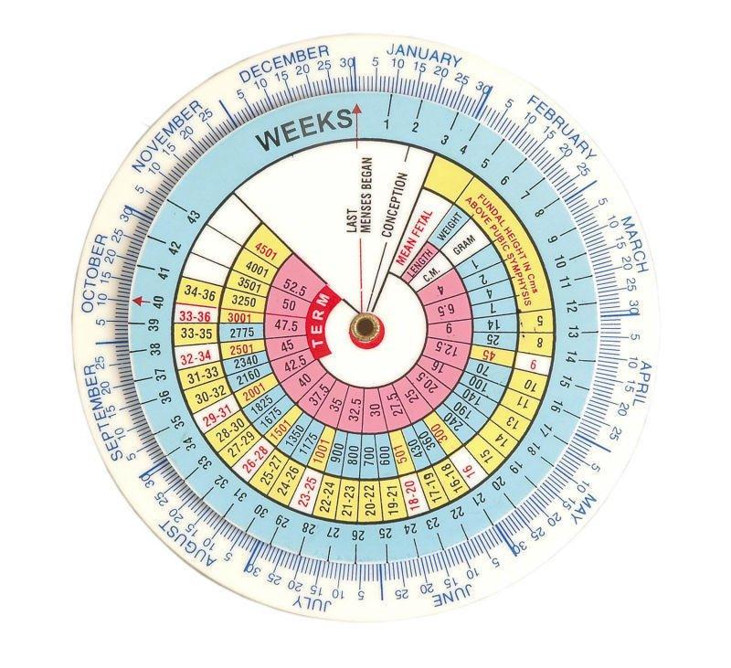 بالصور حاسبة الحمل بالاشهر , كيف تتم حاسبة اشهر الحمل ومعرفة متى تم الحمل 5103 6