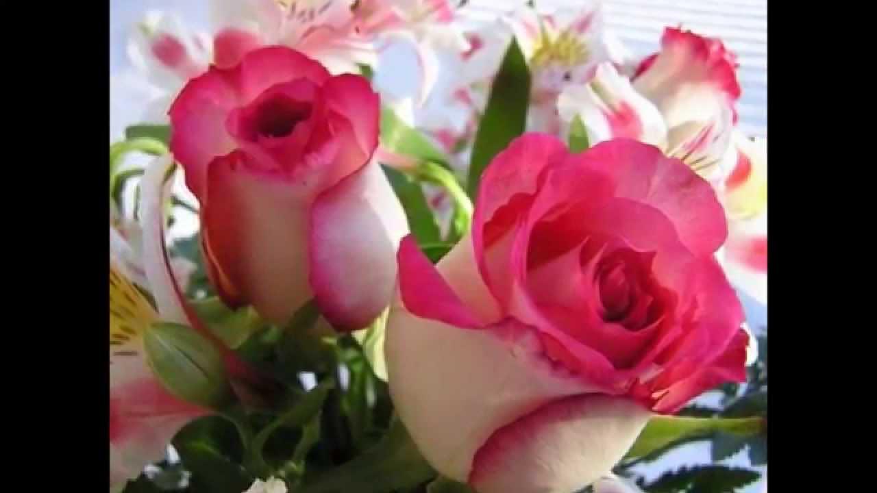صورة اجمل ورود في العالم , الورد هو لغة القلوب والاحساس والمشاعر