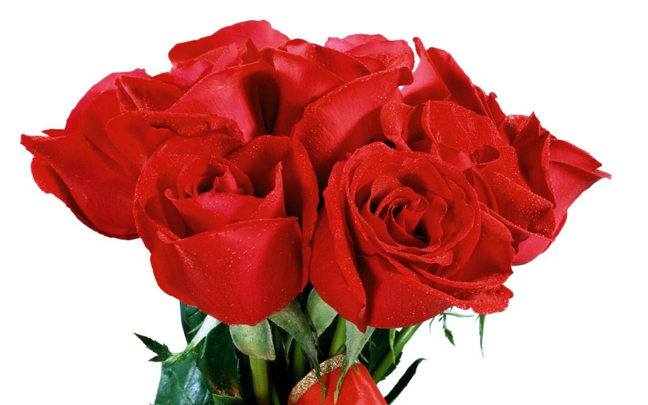بالصور اجمل ورود في العالم , الورد هو لغة القلوب والاحساس والمشاعر 5105 11