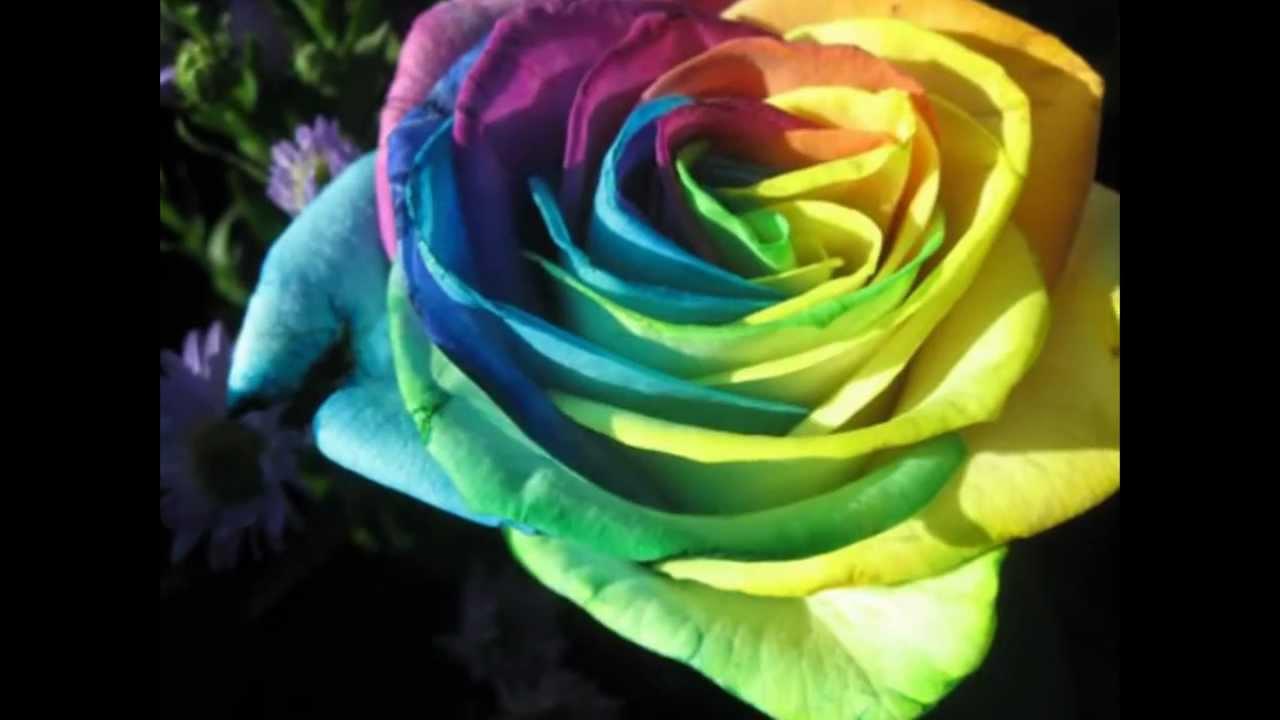 بالصور اجمل ورود في العالم , الورد هو لغة القلوب والاحساس والمشاعر 5105 7
