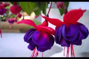 صور اشكال ورود طبيعية , واو اجمل مناظر زهور تاخد العقل