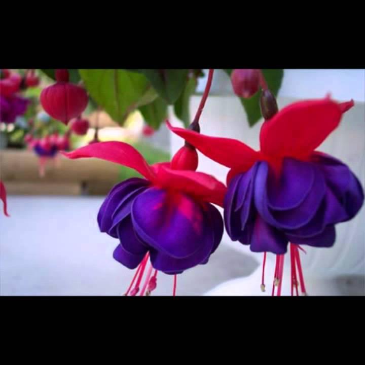صورة اشكال ورود طبيعية , واو اجمل مناظر زهور تاخد العقل