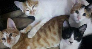 صور صور قطط مضحكة , احلي صور قطط مضحكه