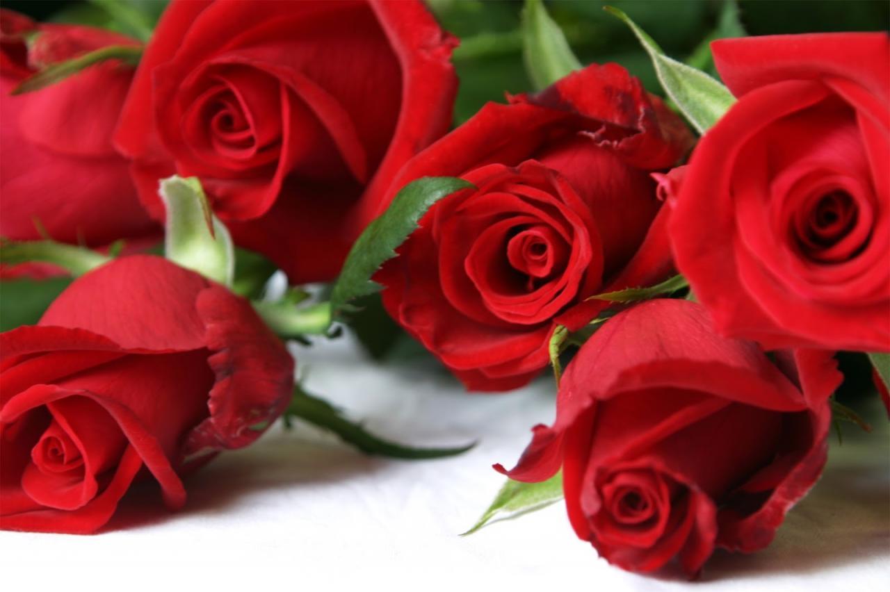 صور صور عن الورد , صورة اجمل ورده