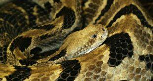 صور تفسير حلم الثعابين في البيت , تفسير رؤيه الثعابين وقتله اثناء النوم