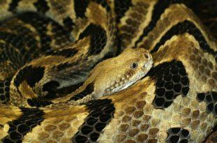 صورة تفسير حلم الثعابين في البيت , تفسير رؤيه الثعابين وقتله اثناء النوم