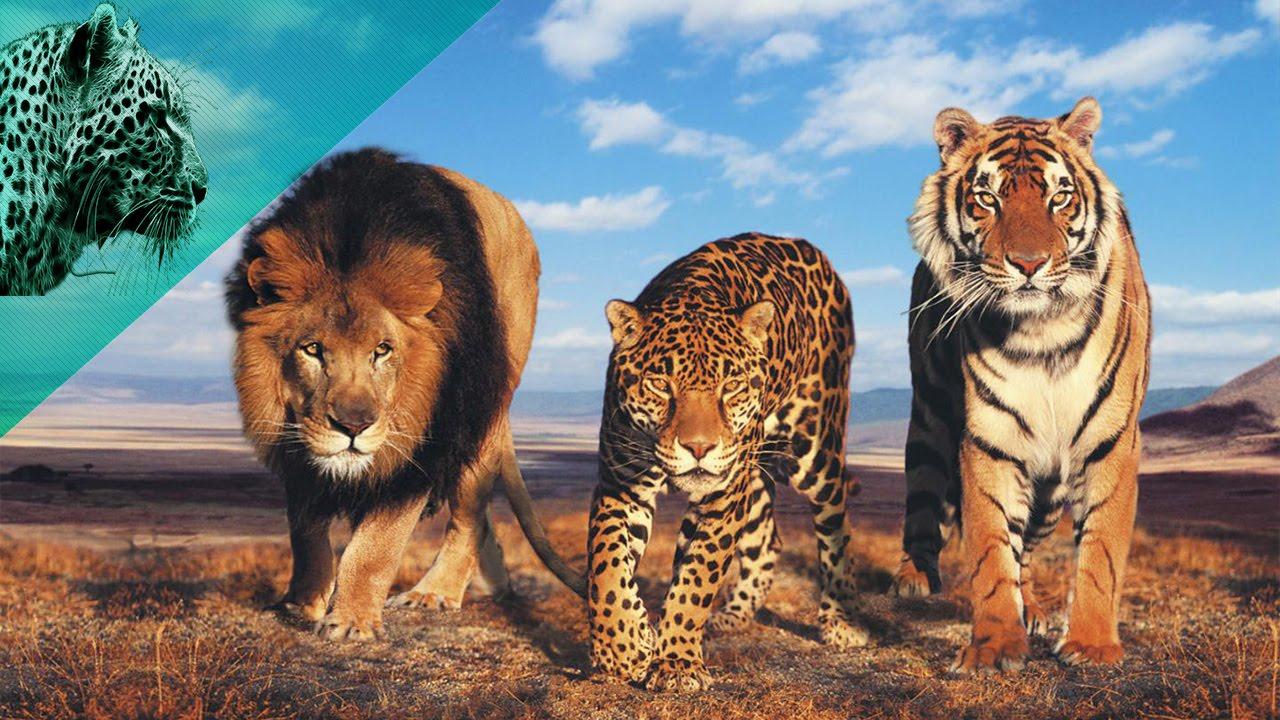 صور اسرع حيوان في العالم , ماهو اسرع حيوان فى العالم
