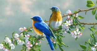 صور صور طيور , اجمل صور الطيور النادرة