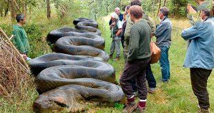 صور اكبر ثعبان في العالم , اخطر انواع الافاعى