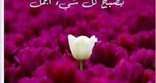 صور صور صباح ومساء الخير , اجمل الصور لصباح و مساء الخير