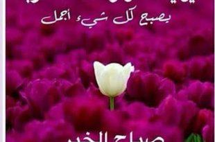 صورة صور صباح ومساء الخير , اجمل الصور لصباح و مساء الخير