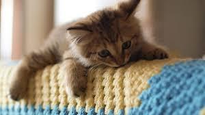 صورة صور قطط حلوه , القطط و جمالها بالصور المميزه جدا