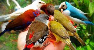 صور صور طيور جميلة , انواع الطيور و جمالها بالصور