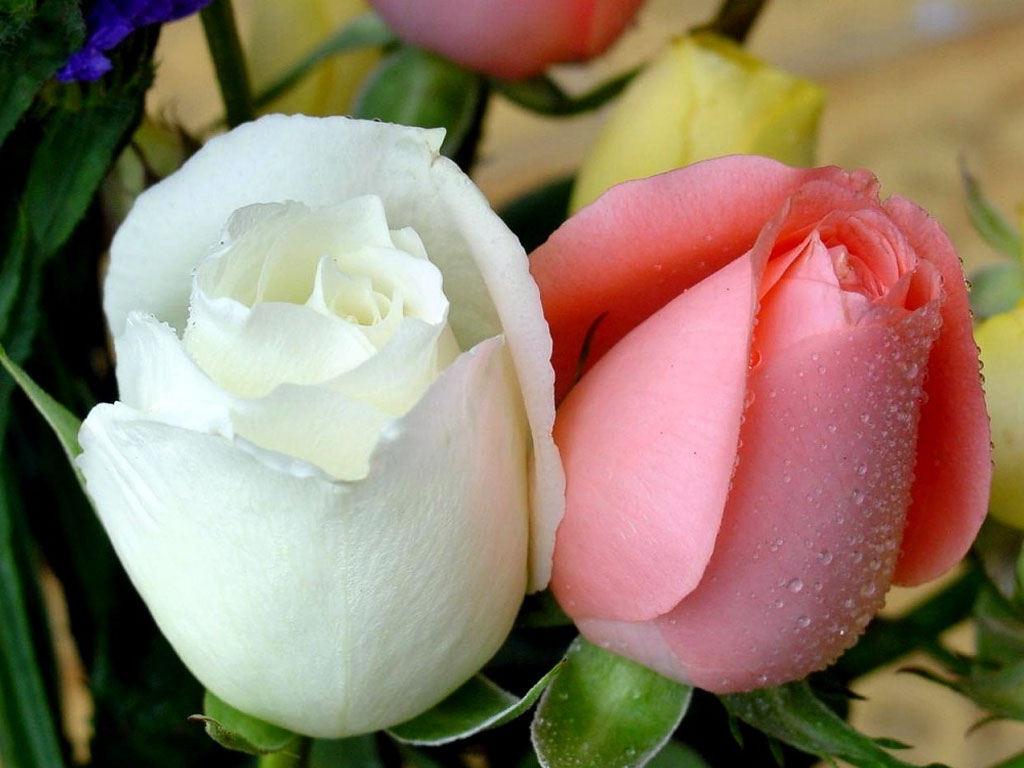 صورة صور زهور , الزهور و جمالها و الوانها بالصور