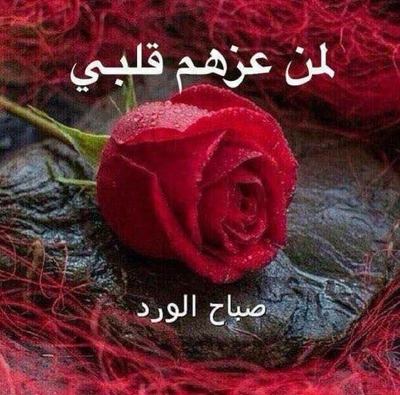 صورة صورصباح الخير رومانسيه , صور منوعه و مختلفه لصباح الخير علي الطريقه الرومانسيه