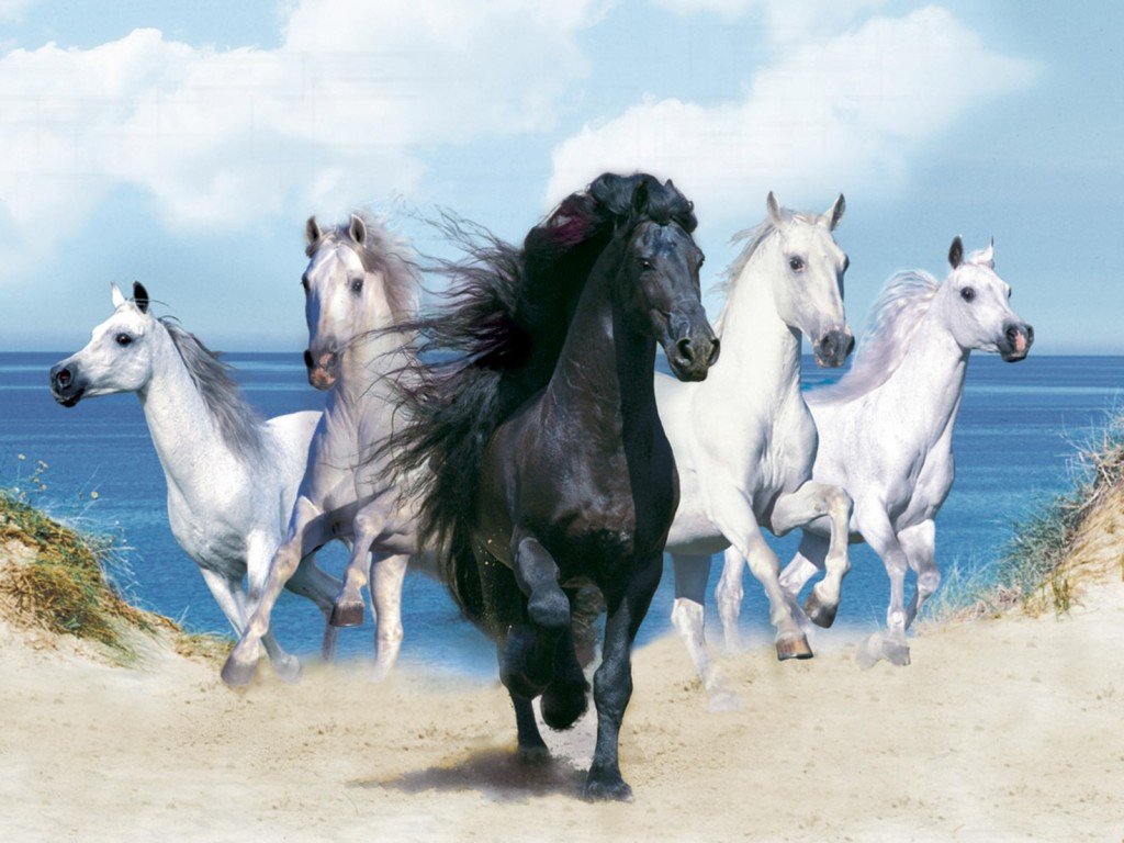 صورة صور خيول , مميزات الخيوة و انواعها و اجملها بالصور