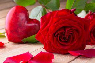 صور صور الورد , الورد و جماله بالصور