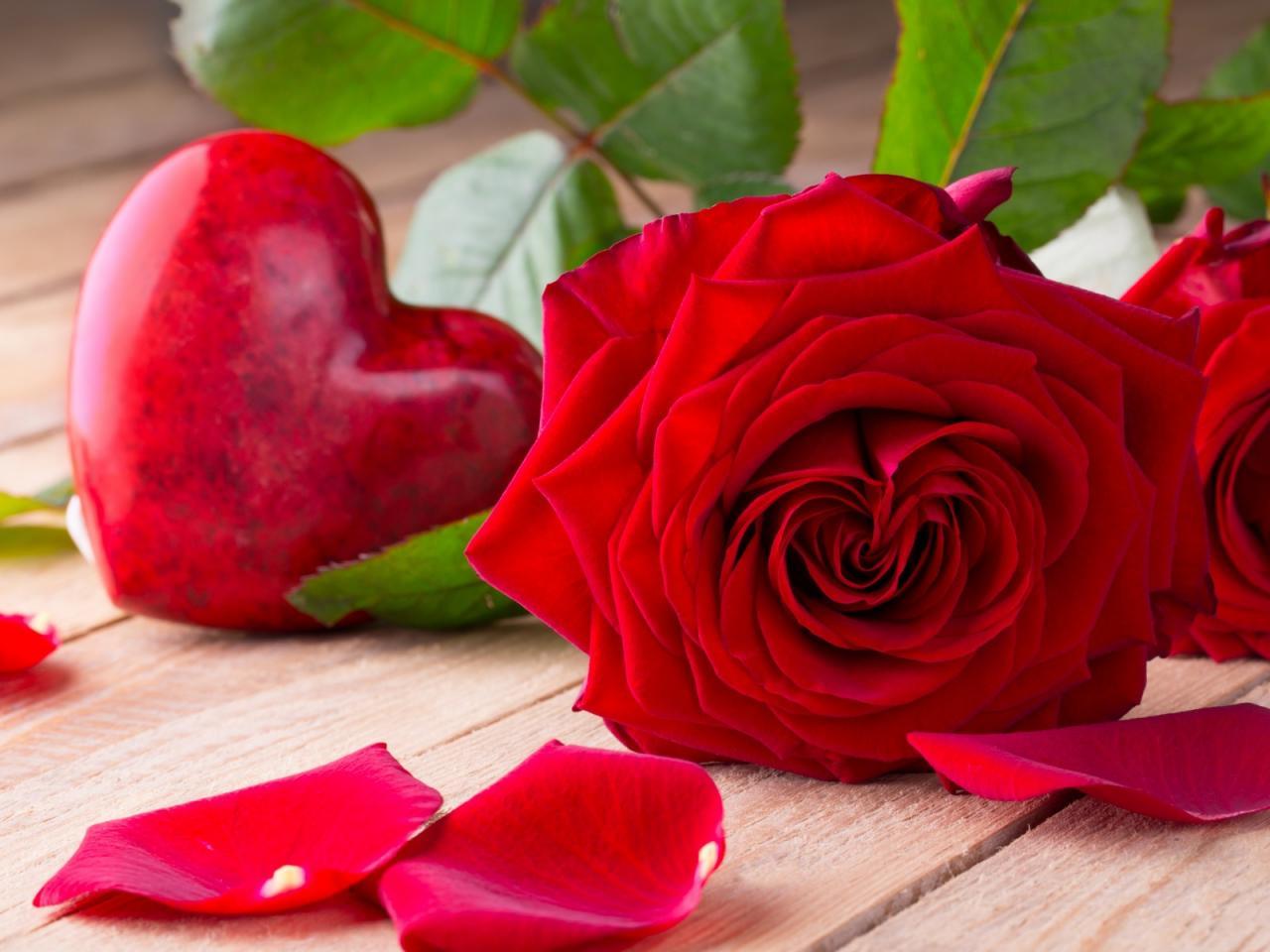 صورة صور الورد , الورد و جماله بالصور
